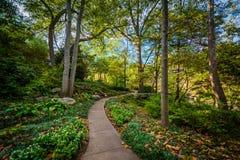 在秋天公园的道路细长的,在格林维尔,南Caroli 免版税库存图片