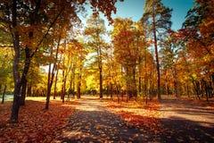 在秋天公园的晴天有五颜六色的树和路的 库存图片
