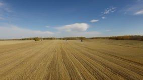 在秋天农厂金麦田的农业收获 股票视频