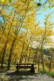 在秋天叶子下的野餐桌 库存图片