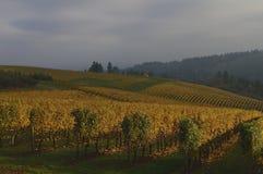 在秋天叶子的日落 免版税图库摄影