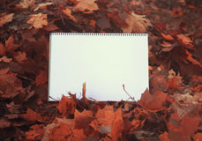 在秋天叶子的白纸 库存照片