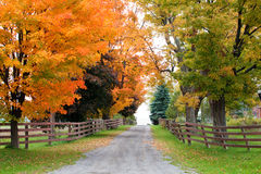 在秋天叶子的美丽的乡下公路 免版税库存照片
