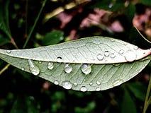 在秋天叶子的雨珠 库存照片