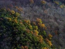 在秋天和冬天之间 免版税库存照片