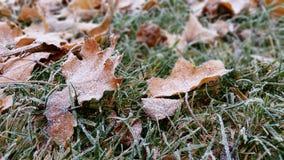 在秋天和冬天之间 免版税库存图片