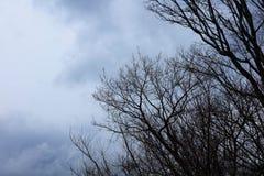 在秋天天气的干燥树 免版税库存图片