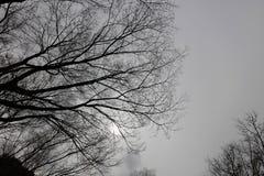 在秋天天气的干燥树 免版税图库摄影