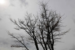 在秋天天气的干燥树 免版税库存照片