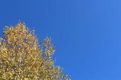 在秋天天空的背景的桦树 库存图片