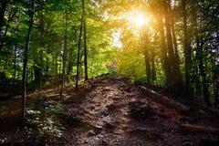 在秋天太阳光芒的森林道路 免版税库存图片