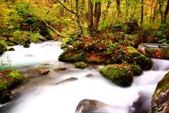 在秋天季节期间的Oirase走的足迹 库存图片