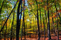 在秋天季节期间的石山北卡罗来纳风景 免版税库存图片