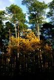 在秋天季节混合的森林 免版税图库摄影