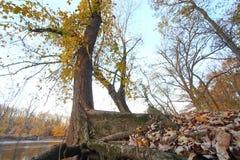 在秋天季节的一棵树 免版税库存照片