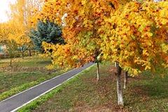 在秋天季节的山梨树在公园 免版税库存照片