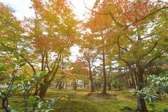 在秋天季节的美丽的金黄亭子Kinkakuji寺庙与轻的泄漏 免版税图库摄影
