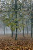 在秋天季节的雾 免版税库存图片