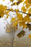 在秋天季节的雾 免版税图库摄影