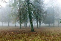 在秋天季节的雾 免版税库存照片