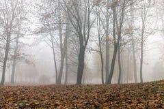 在秋天季节的雾 库存图片
