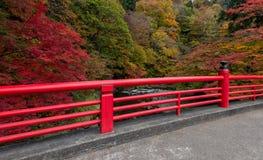 在秋天季节的Fudo小河在Nakano momiji山 库存照片
