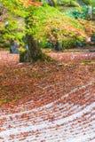 在秋天季节,选择聚焦的Komyozenji寺庙 库存照片