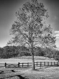 在秋天小牧场的树 库存照片