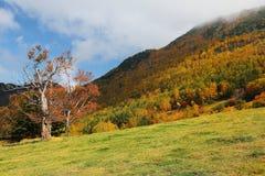 在秋天山坡的一棵美丽的槭树在晴朗的天空下| 免版税库存图片