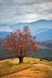 在秋天山的孤立树 多云秋天场面 免版税库存图片