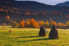 在秋天山谷,与五颜六色的叶子的树和吃草马的看法 免版税图库摄影