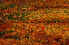 在秋天山风景的孤立红色树 免版税库存图片