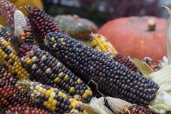 在秋天市场上的多色的玉米 库存照片