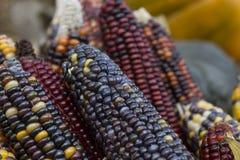 在秋天市场上的多色的玉米 免版税库存图片