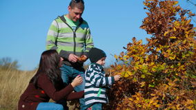 在秋天布什附近的愉快的年轻家庭 股票视频