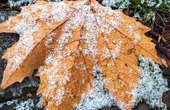 在秋天干燥叶子的第一雪 免版税库存照片