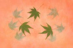 在秋天心情的鸡爪枫叶子 免版税库存图片