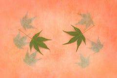 在秋天心情的鸡爪枫叶子 免版税图库摄影