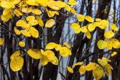 在秋天所有叶子 免版税库存照片