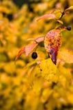 在秋天所有叶子 免版税图库摄影