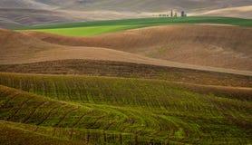 在秋天收获期间的被犁的麦田 免版税图库摄影