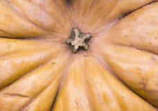 在秋天收获节日的南瓜 背景,菜 库存图片