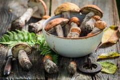 在秋天收集的健康狂放的蘑菇 免版税库存图片
