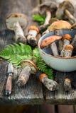在秋天收集的未加工的狂放的蘑菇 库存图片