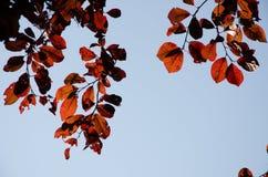 在秋天旁边的秋叶 背景 库存图片