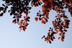 在秋天旁边的秋叶 背景 免版税库存照片