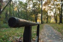 在秋天日落的公园颜色 免版税库存照片