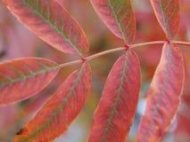 在秋天时间的红色叶子 免版税库存照片