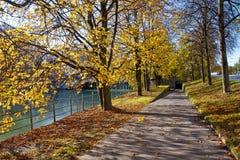 在秋天时间的红色和金黄叶子 库存照片