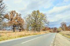 在秋天时间的色的树,在高速公路附近,橙黄叶子 免版税库存照片
